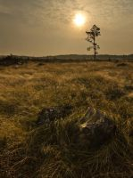 Lone Survivor by Hazelberg