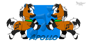 Apollo Pony Ref by IgnisFireWolf