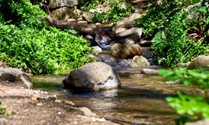 Small Stream by gendosplace