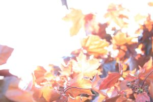 through the leaves. by shadowgeist