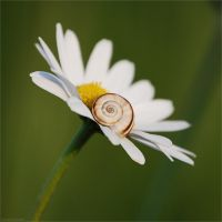 in union flower and snail by christinegeier