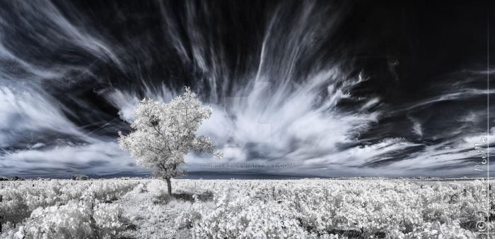 Calm before strom (INFRARED) by jeje62