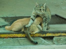 Mammy cat by ChizuLindson
