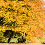 Autumn 2015 | 1 by Rob1962