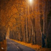 last ride by ildiko-neer