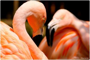 Flamingo Portrait Studio 3 by SilkenWinds