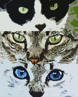 Cats Eyes by dimensioncr8r