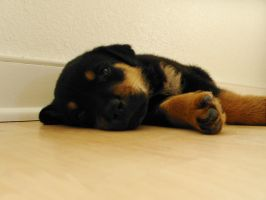 Puppy Pic 5 by Nianya