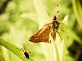 7884-skipper and bug by barefootphotos