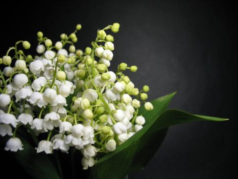 lily of the valley by Amaltheea