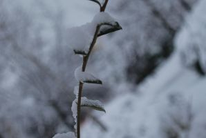 Snow on the branch .. by ImmortalEmotion