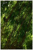 Green Curtain - Part 1 by janey-in-a-bottle
