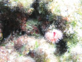 Tube worm by anubis-love