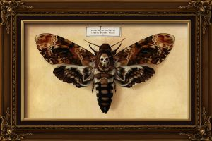 Death's Head Moth by Chronoperates