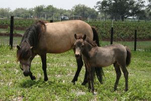 Mini Mare  and Foal Stock by GloomWriter