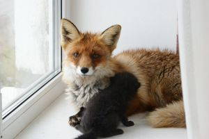 Young foxes 13 by foxsvir