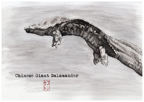 Chinese Giant Salamander [Critically Endangered] by JackSephton