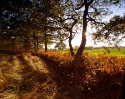 Skipwith Woods by davepphotographer