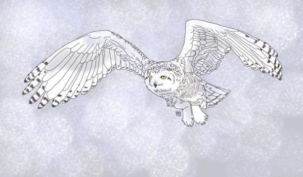 Friend's snowy owl character by A-Girl-Named-Tex