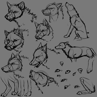 wolf anatomy 1 by Jau-chan