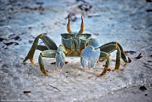 Horned Crab by Oddersnude
