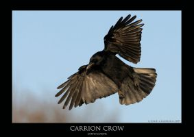 CORVUS.6 by THEDOC4