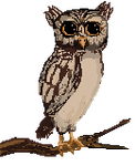 A Hoot. by Cosmos-Centric