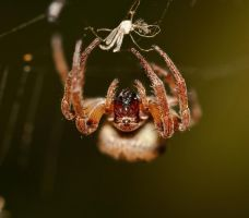Spiders are creepy by Giltner
