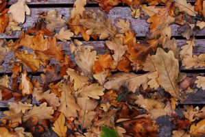 Autumn Leaves by yeahBISH