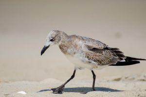 Beach Bird by UltraSonicUSA