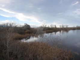 Sawhill Ponds in November by Collidoscope