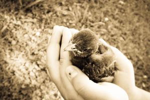 A Precious Life In Her Hands by ChicaDelMar