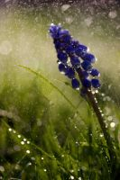 Spring showers by AngiWallace