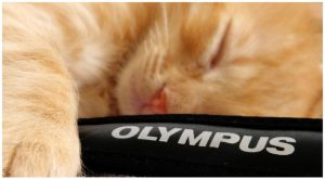 Olympus cat by sunset-drive