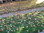 Lawn full of leaves by Teiyuo