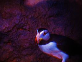Puffin by NottheVoreFreak