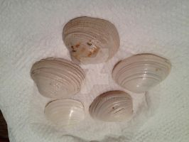 Shells for trade by petshop101