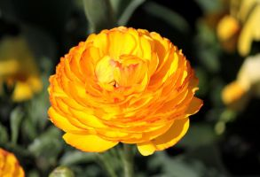 Brightest Yellow by NorthernLand