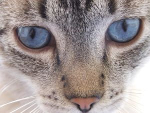 Cat  s eyes by Umrae Thara - Kedi Severlere
