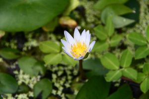 Day 292: Small Flower by coolwanglu