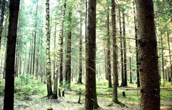 Forest series-Russian forest7 by takiostavim