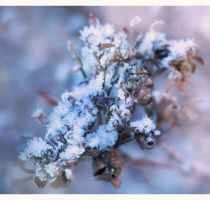 Frozen in the winters dream II by hypnose77
