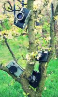 camera tree by Sylwe