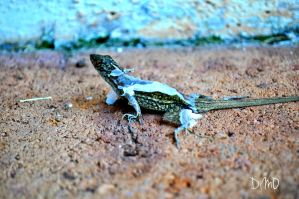 Gecko V (We Meet Again) by AllAboutDianne