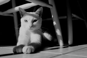 white cat in black and white by bobbyfufu