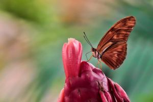 Dryas Julia 3 by Witoldhippie