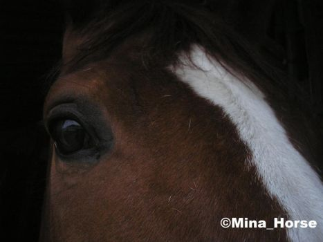 Eye of horse 1 by MinaHorse