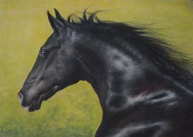 Friesian On Yellow Pastel Portrait by PASTELIZATOR
