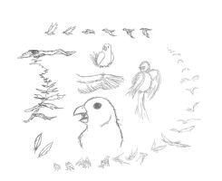 Concept Art: Bird Sketches by banana-bird111