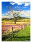 Darling Downs by dannyp5000